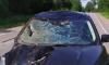 В ДТП у Гладышевского заказника погиб лось