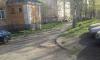 На улицах Петрозаводска были замечены дикие кабаны
