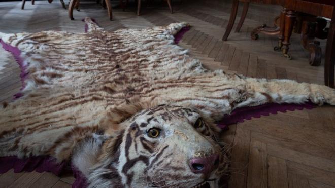 В Петербурге шесть лет делят тигриную шкуру из кабинета Семенова-Тян-Шанского