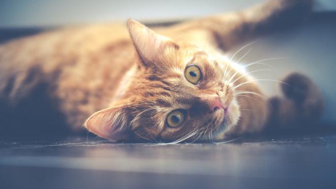Кошка в коммунальной квартире