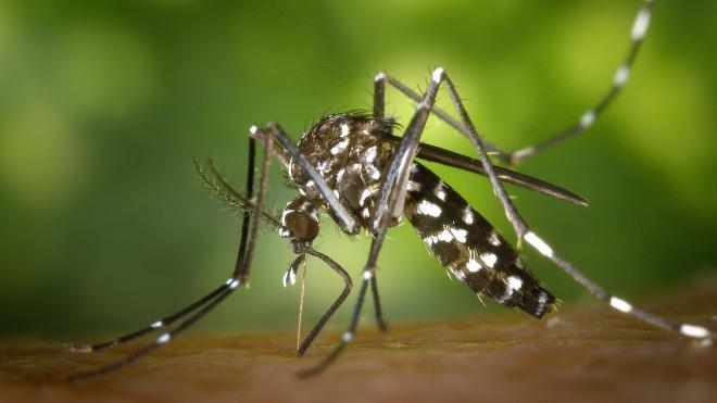 Женщине ампутировали руки и ноги после укуса комара
