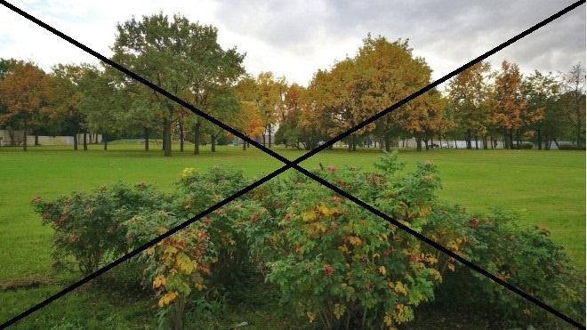 Сад на Неве все-таки уничтожат ради строительства Судебного квартала