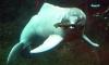 Ученые обнаружили в Бразилии новый вид речных дельфинов