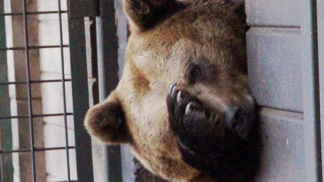 """""""Велес"""" открыл единый номер телефона для бесплатных консультаций по диким животным"""