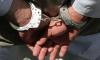 В Нидерландах арестован взломщик квартиры российского посла