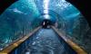 В Санкт-Петербурге планируют построить подводный тоннель