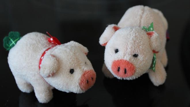ЗакС закупит к Новому году плюшевых поросят