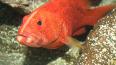Две хищных рыбы из Шри-Ланки прибыли в Петербургский ...