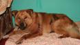 В Ленобласти спасли истекающего кровью пса, жестоко ...