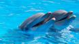 Из-за карантина дельфинарий в Петербурге оказался ...