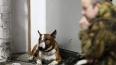 В Петербурге хозяин бойцовой собаки с оружием напал ...