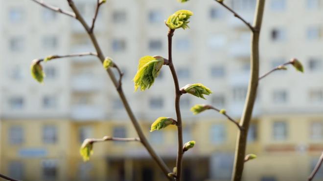 В Петербурге в среду потеплеет до плюс 10 градусов
