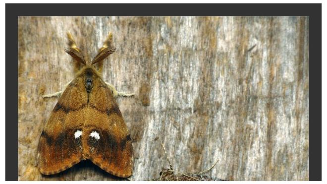 Ученые рассказали о нашествии бабочек на Москву