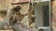 Ленинградский зоопарк объявил традиционную социальную ...