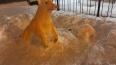 На Учительской неизвестный скульптор вылепил из снега ...