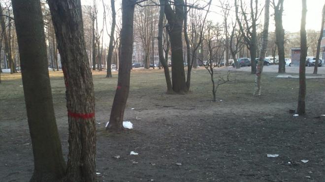 На 2-ом Муринском в Петербурге вырубят 30 деревьев
