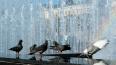 В Петербурге дали названия трем безымянным фонтанам