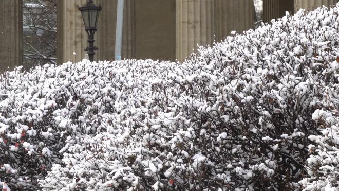 В начале недели Петербург ждёт мокрый снег