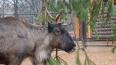 ВЛенинградском зоопарке появились новые животные: ...