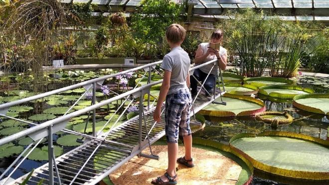 """В Ботаническом саду с помощью ребёнка проверили на прочность листья """"Виктории амазонской"""""""