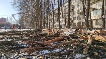 В Калининском районе вырубили пять вязов, зараженных графиозом