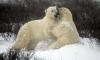 Александр Зацепин рассказал, как песня про белых медведей стала хитом