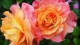 На Дворцовой завершен фестиваль цветов: выбраны лучшие ...