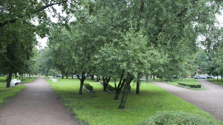 В этом году в Петербурге высадят почти 11 тысяч деревьев