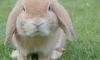 Заводчики кроликов в Волосовском районе устроили антисанитарию