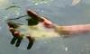 Из Ладоги выловили рыбака-утопленника