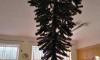 В Омском детском садике прибили новогоднюю ель к потолку