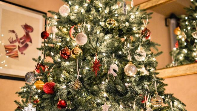 Жители Ленобласти смогут легально срубить живую ель к новогодним праздникам