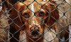ЗакС Петербурга принял законопроект о льготах владельцам приютов для животных