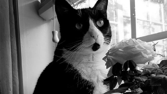 """Умерла кошка из мема """"кричащий плачущий кот"""""""