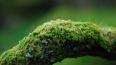 Петербургские учёные нашли новые виды лишайника в ...