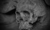 Скелет без вести пропавшего петербуржца нашли на Ржевке