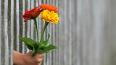 Цветочный бизнес в Ленобласти пострадал во время самоизо...