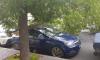 Дерево упало на машину и перегородило проезд на Степана Разина