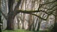 Колпинский парк благоустроят к осени 2019