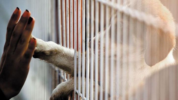 В Петербурге планируют открыть два государственных приюта для бездомных животных