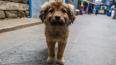 В суде решают судьбу петербургских бродячих собак