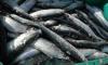 В Ленинградской области растет рыбная промышленность