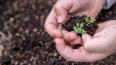 Жители Купчино сообщили о массовой краже растений ...