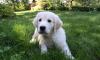 Собака стала приёмной матерью для поросёнка Ван Дамма