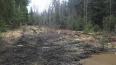 Администрация Выборга борется с незаконной вырубкой леса