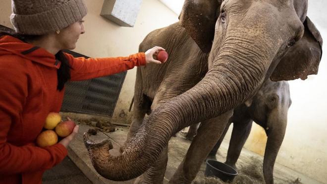 Животным итальянского цирка на Фонтанке не дают расслабиться во время пандемии