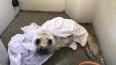 В Петербурге спасли двух тюленей