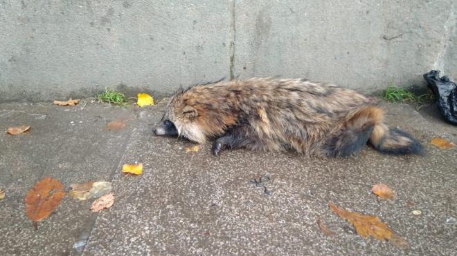 Хозяин найденной под Володарским мостом енотовидной собаки рассказал о состоянии животного