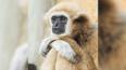 Ленинградский зоопарк временно закрывается для посетителей ...