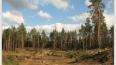 Александр Дрозденко защитит леса в поселке Сиверский